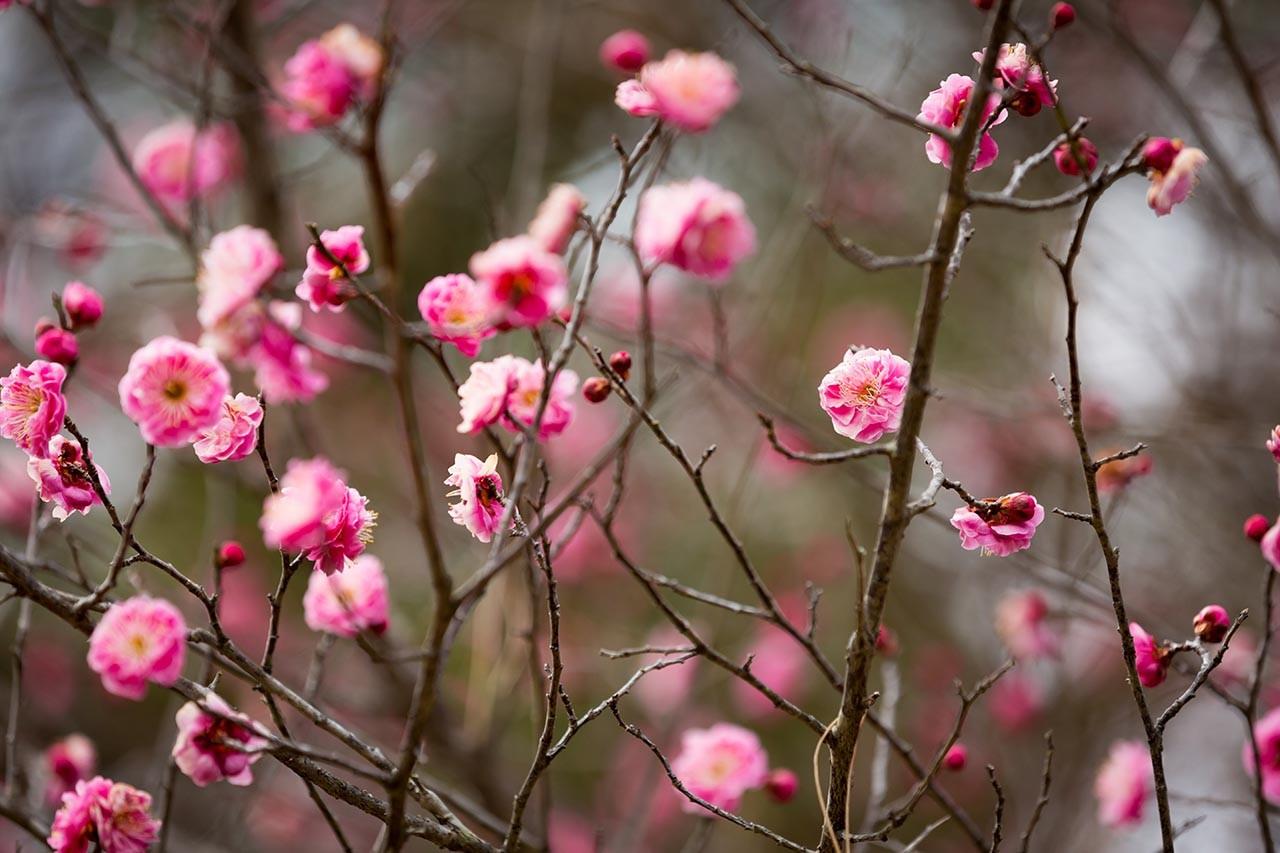 春の気配♪