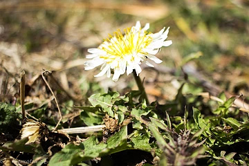 春 花盛り